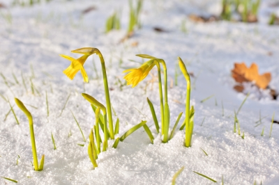 spring and grief